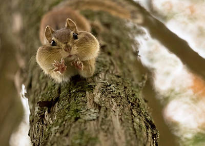 Rodent Wall Art - Photograph - Don't You Even Try To Grab My Nuts! by Lucie Gagnon