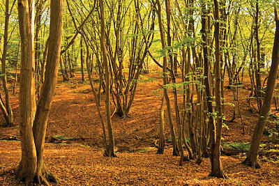 Art Print featuring the photograph Donyland Woods by David Davies