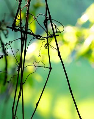 Photograph - Doodle Vine by Tracy Male