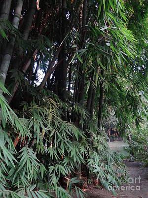 Photograph - Doon School Bamboos 6 by Padamvir Singh