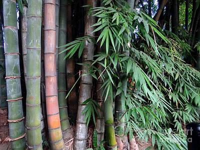 Photograph - Doon School Bamboos 7 by Padamvir Singh