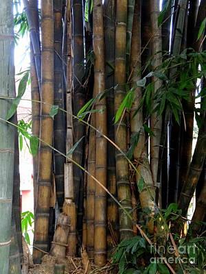 Photograph - Doon School Bamboos 8 by Padamvir Singh