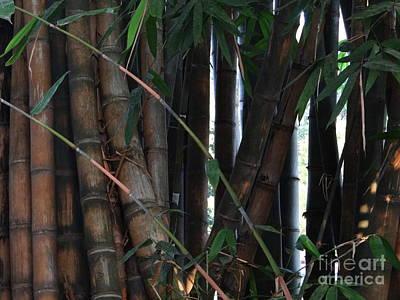 Photograph - Doon School Bamboos 9 by Padamvir Singh
