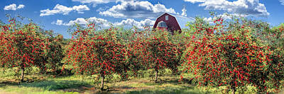Cherry Tree Painting - Door County Cherry Harvest And Red Barn Panorama by Christopher Arndt