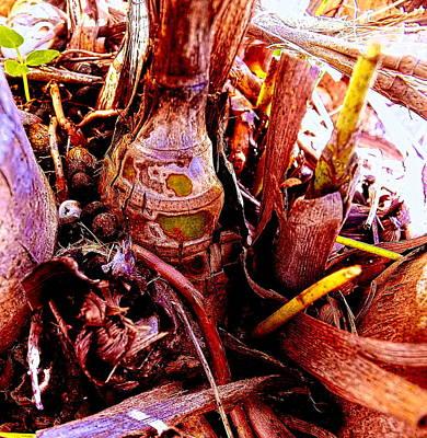 Dormant Bud Original by Sandra Pena de Ortiz