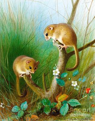 Fauna Painting - Dormice by Pg Reproductions