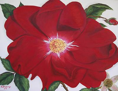 Painting - Dortmund Climber Rose by Sharon Duguay