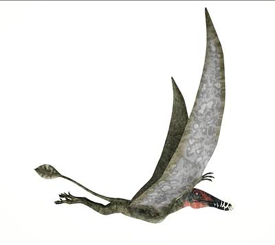 Flying Dinosaur Photograph - Dorygnathus Dinosaur by Leonello Calvetti