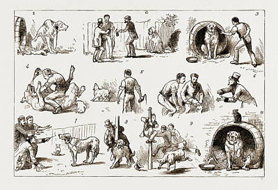 Vet Drawing - Dosing A Dog, 1883 1. Our St. Bernard Showed Symptoms by Litz Collection