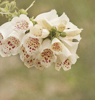 Foxglove Flowers Photograph - Dots-foxglove Flower by Kim Hojnacki