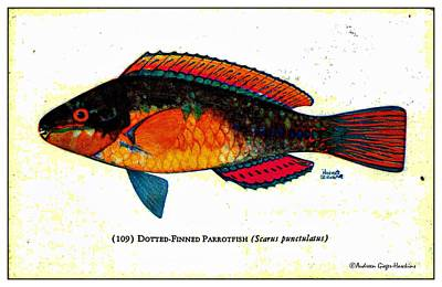 Parrotfish Digital Art - Dotted Finned Parrotfish 1932 Vintage Postcard by Audreen Gieger