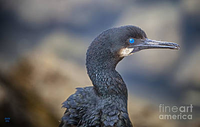 Duck Photograph - Double-crested Cormorant by David Millenheft