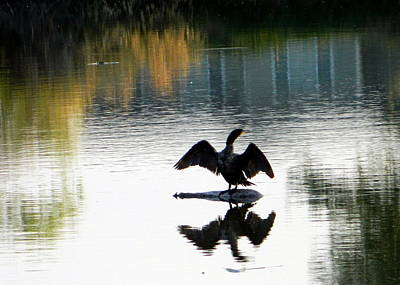 Mark Wagner Wall Art - Photograph - Double-crested Cormorant by Mark Wagner