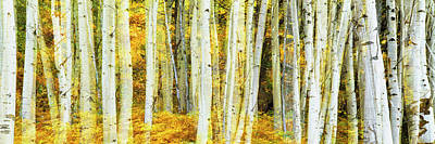 Double Exposure Of An Aspen Grove Art Print by Panoramic Images