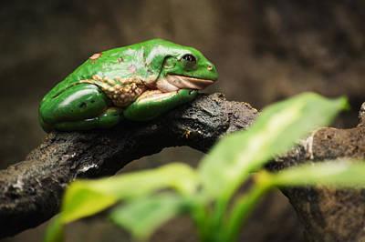 Amy Hamilton Watercolor Animals - Double Green by Linda Kerkau