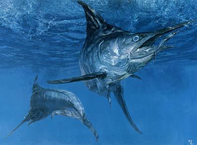 Blue Marlin Photograph - Double Header Makaira Nigricans, Blue by Stanley Meltzoff / Silverfish Press