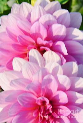 Double Pink Art Print by Kathleen Struckle