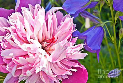 Photograph - Double Pink Peony Flower by Valerie Garner