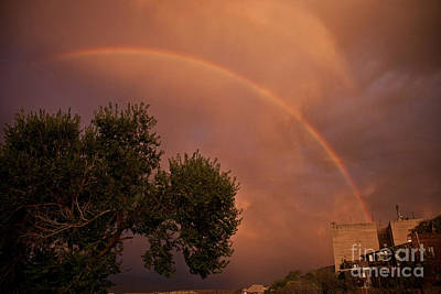 Photograph - Double Red Rainbow With Tree In Jerome by Ron Chilston