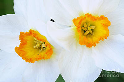 Photograph - Double Trouble by Larry Ricker