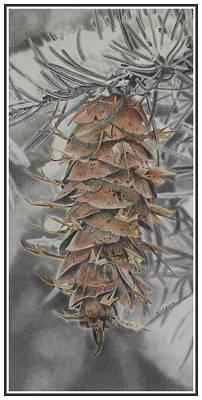 Pine Cones Drawing - Douglas Fir Pine Cone by Scott Kingery