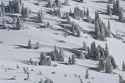 Michael Douglas Photograph - Douglas Fir Tree Shadows In Winter by Michael Quinton
