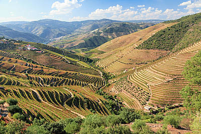 Photograph - Douro River Vineyards, Portugal by Rusm