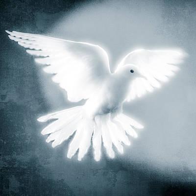 Dove Photograph - Dove In Flight Blue by Yo Pedro