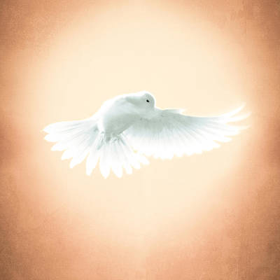 Dove In Flight Yellow Art Print