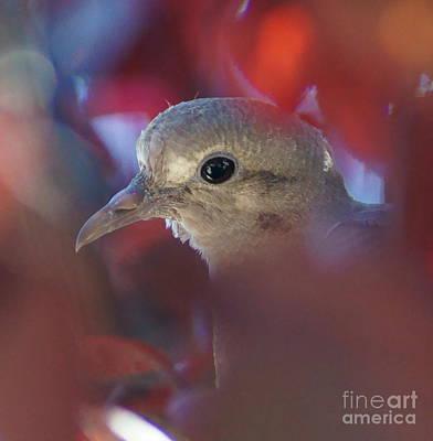 Photograph - Dove L by D C