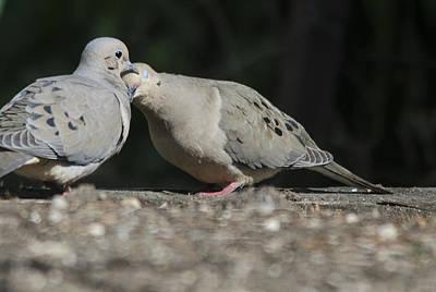 Dove Love Art Print