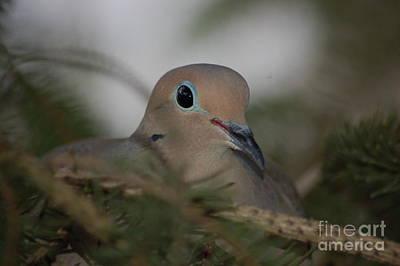Photograph - Dove On Egg by Randy J Heath