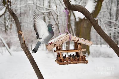 Hungry Pigeon Sitting On Bird Feeder Art Print