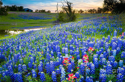 Bluebonnet Photograph - Down By The Pond by Inge Johnsson
