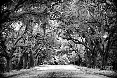 Photograph - Down Oak Avenue by John Rizzuto