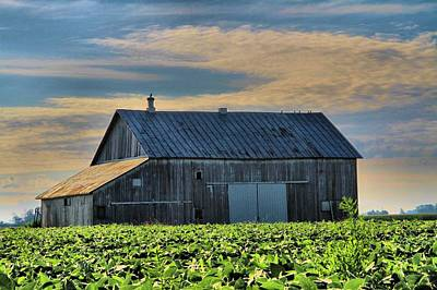 Green Beans Photograph - Down On The Farm by Dan Sproul