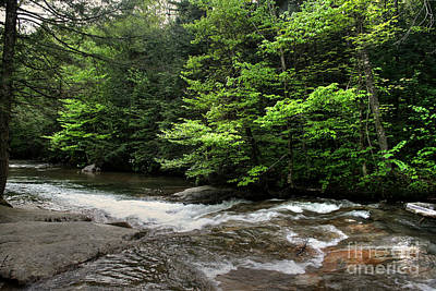 Photograph - Down River by LaRoque Photography