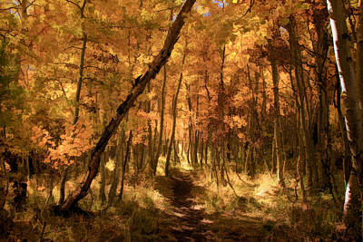 Autumn Landscape Photograph - Down The Golden Path by Donna Kennedy
