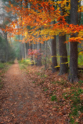 Litchfield County Landscape Photograph - Down The Trail by Bill Wakeley