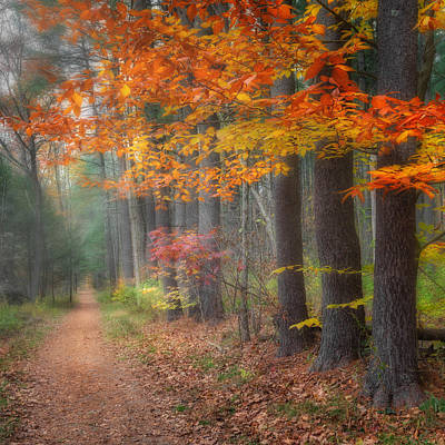 Litchfield County Landscape Photograph - Down The Trail Square by Bill Wakeley