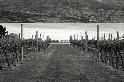 Grape Vines Photograph - Down The Vineyard Path by Monte Arnold