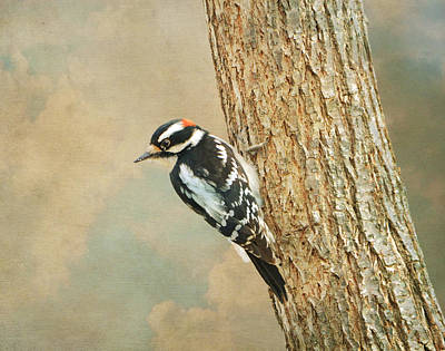 Downy Woodpecker 2 Art Print