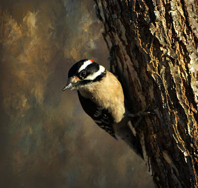 Photograph - Downy Woodpecker 3 by Deena Stoddard