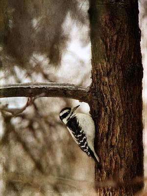 Photograph - Downy Woodpecker by Davandra Cribbie