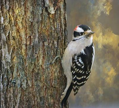 Photograph - Downy Woodpecker by Deena Stoddard