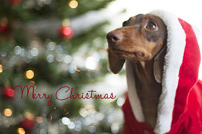 Doxie Clause Art Print by Rischa Heape
