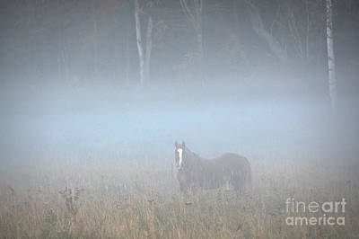 Photograph - Dozer In The Fog by Cheryl Baxter