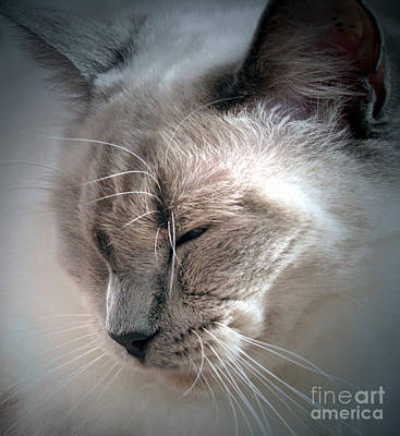 Photograph - Dozing In The Sun by Amber Nissen