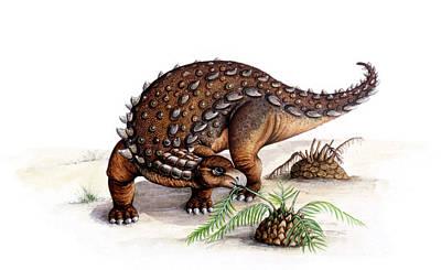 Reptiles Photograph - Dracopelta Dinosaur by Deagostini/uig