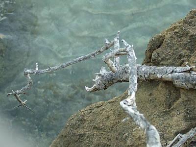 Photograph - Dragon Branch by Katerina Naumenko